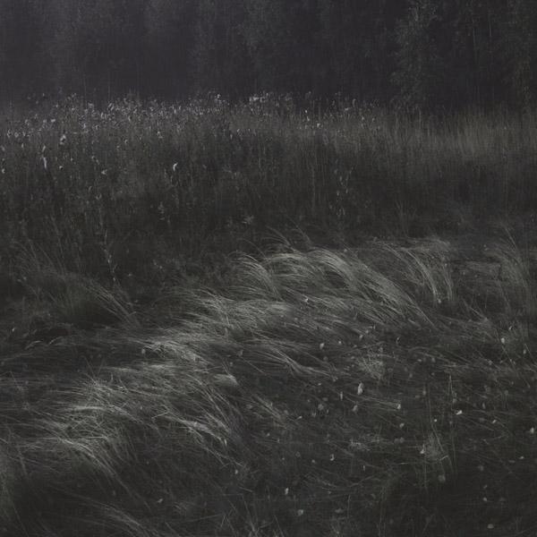 erie calm wind grass